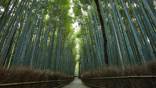 The Bamboo Forest in Kyoto's Arashiyama neighborhood.