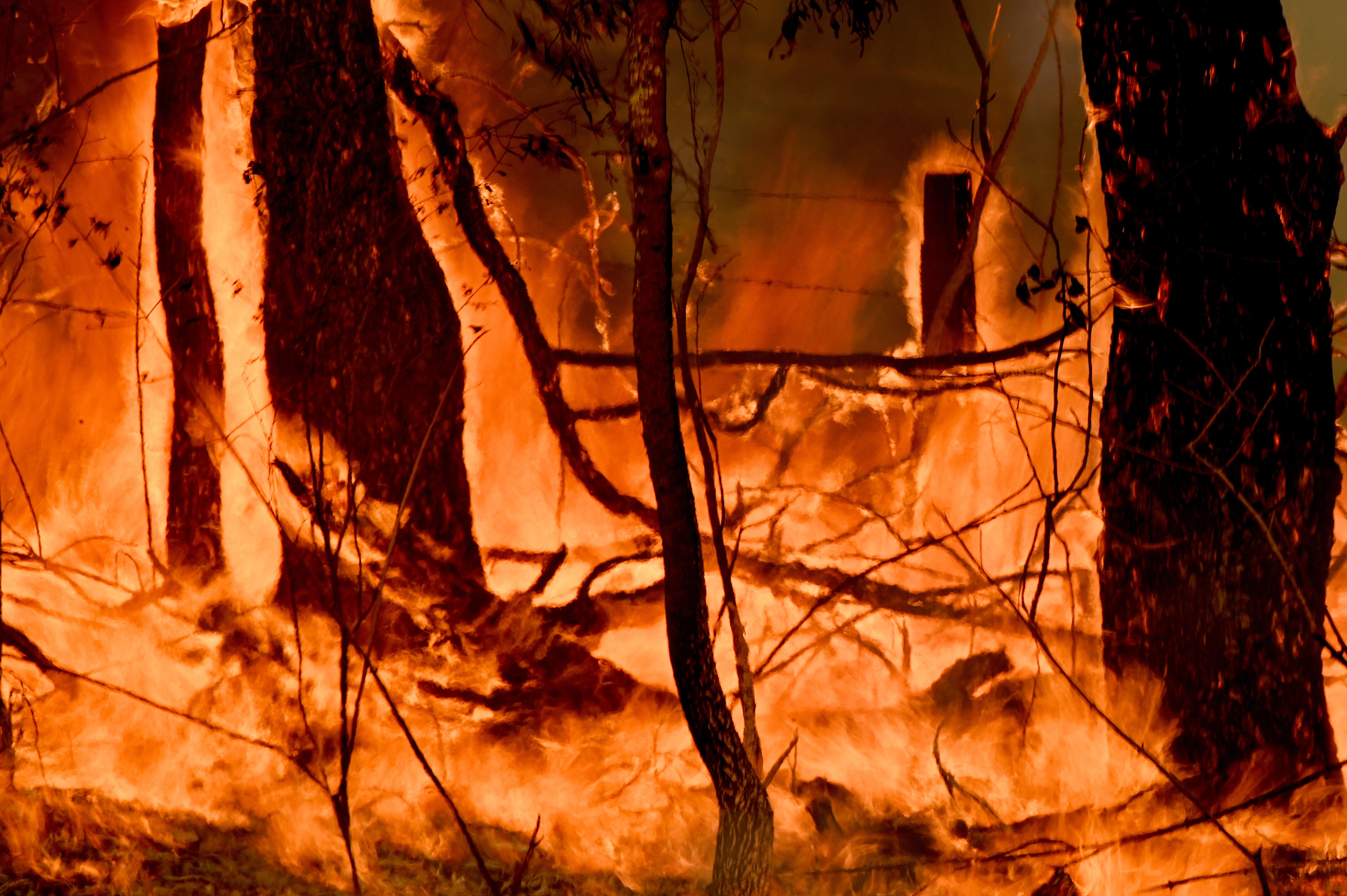 A bushfire burns outside a property near Taree, 350km north of Sydney on November 12.