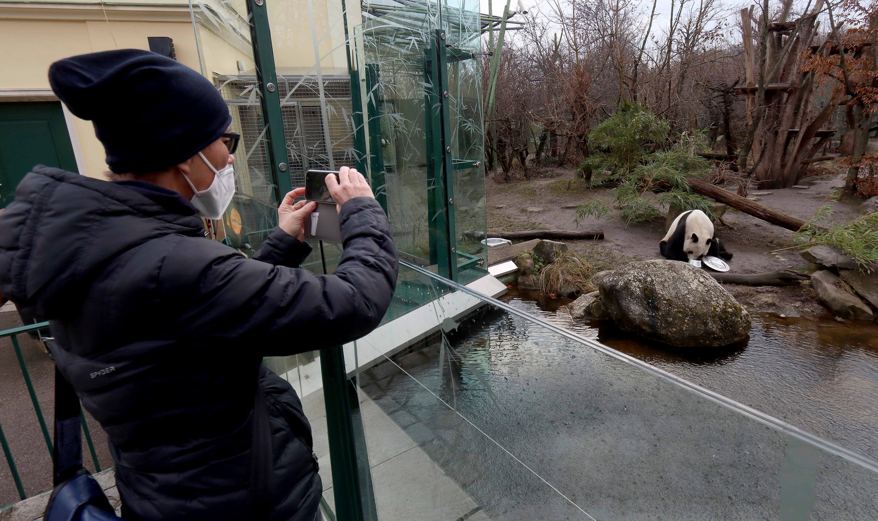 A visitor observes a panda at the Schoenbrunn Zoo in Vienna, Austria, on February 8.