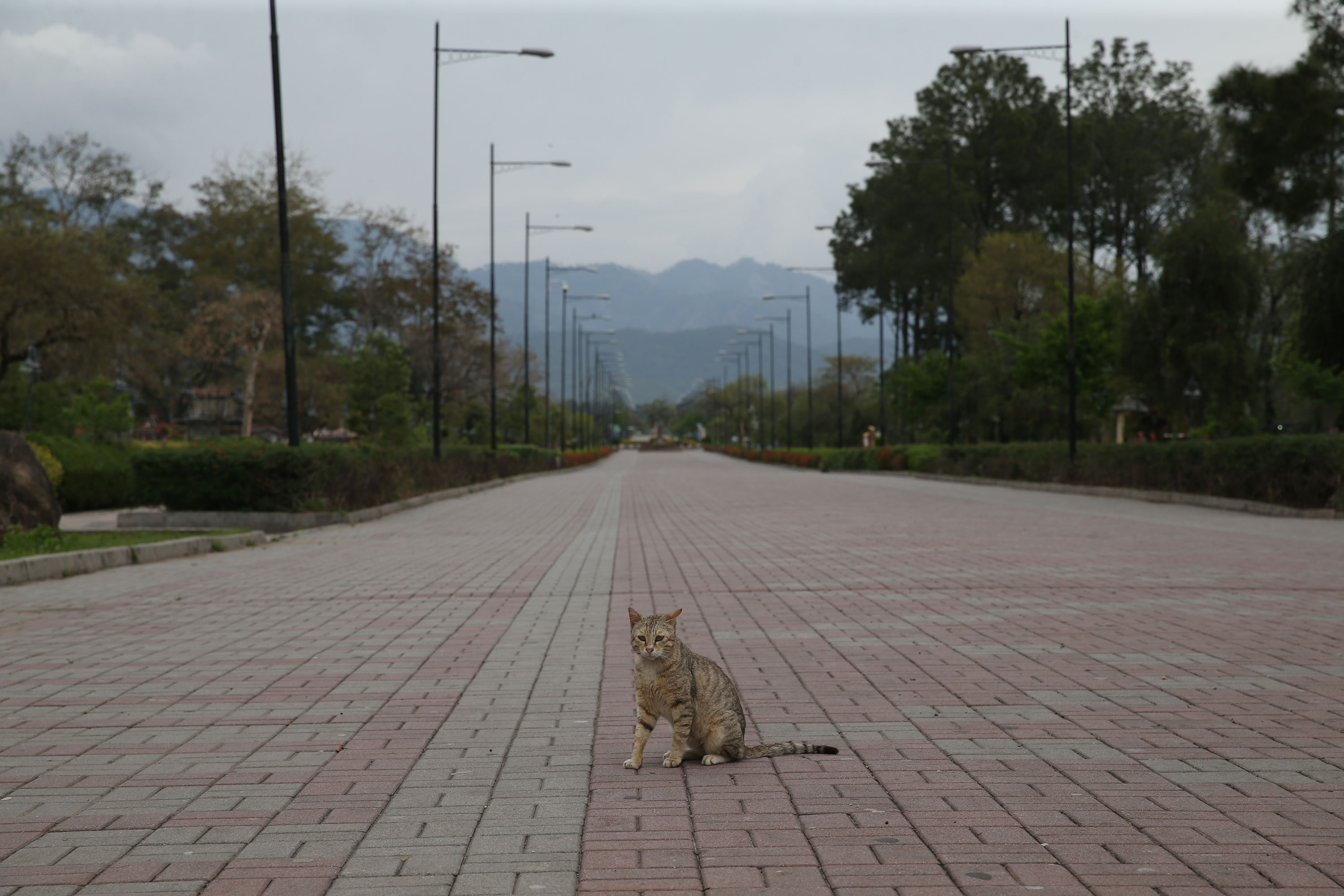 A cat roams the Rawal Lake area in Islamabad, Pakistan, on April 01.
