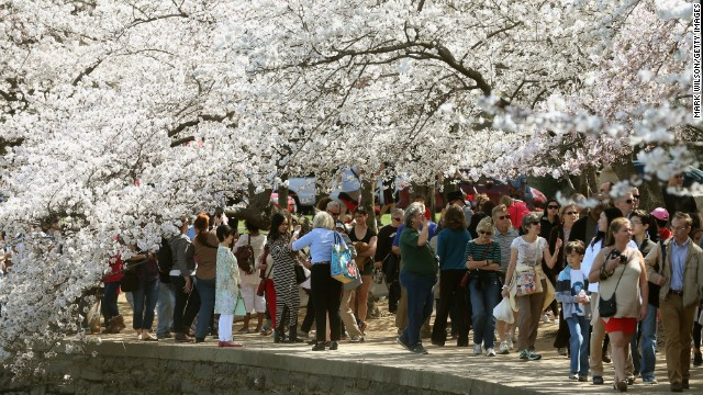 Visitors enjoy the cherry blossom trees during the Cherry Blossom Festival in Washington, DC, in 2016.