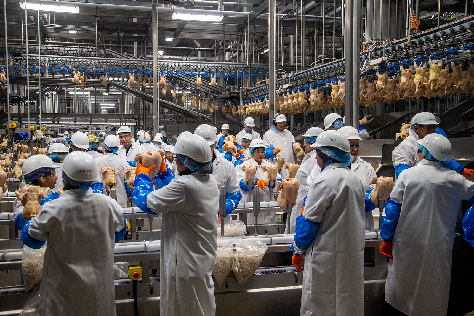 Workers process around 200,000 chickens a day for Costco at the Lincoln Premium Poultry plant in Fremont, Nebraska February 27.