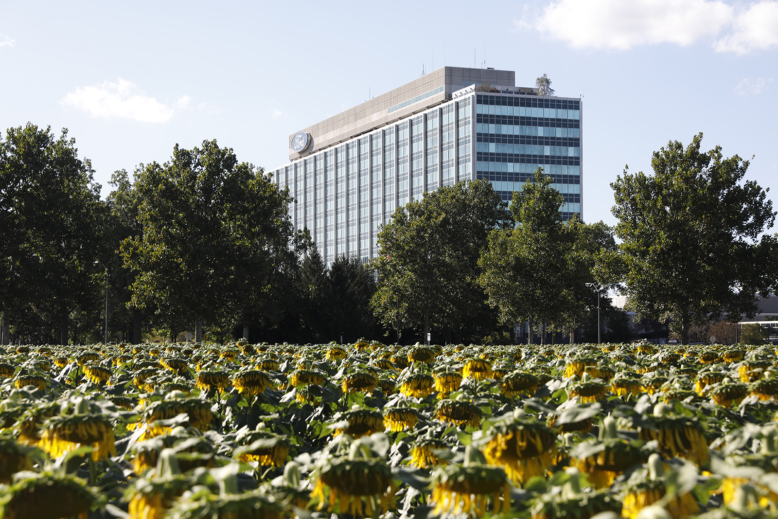 Ford Motor Co. world headquarters stands behind a sunflower patch in Dearborn, Michigan,  on Saturday, September 14, 2019.