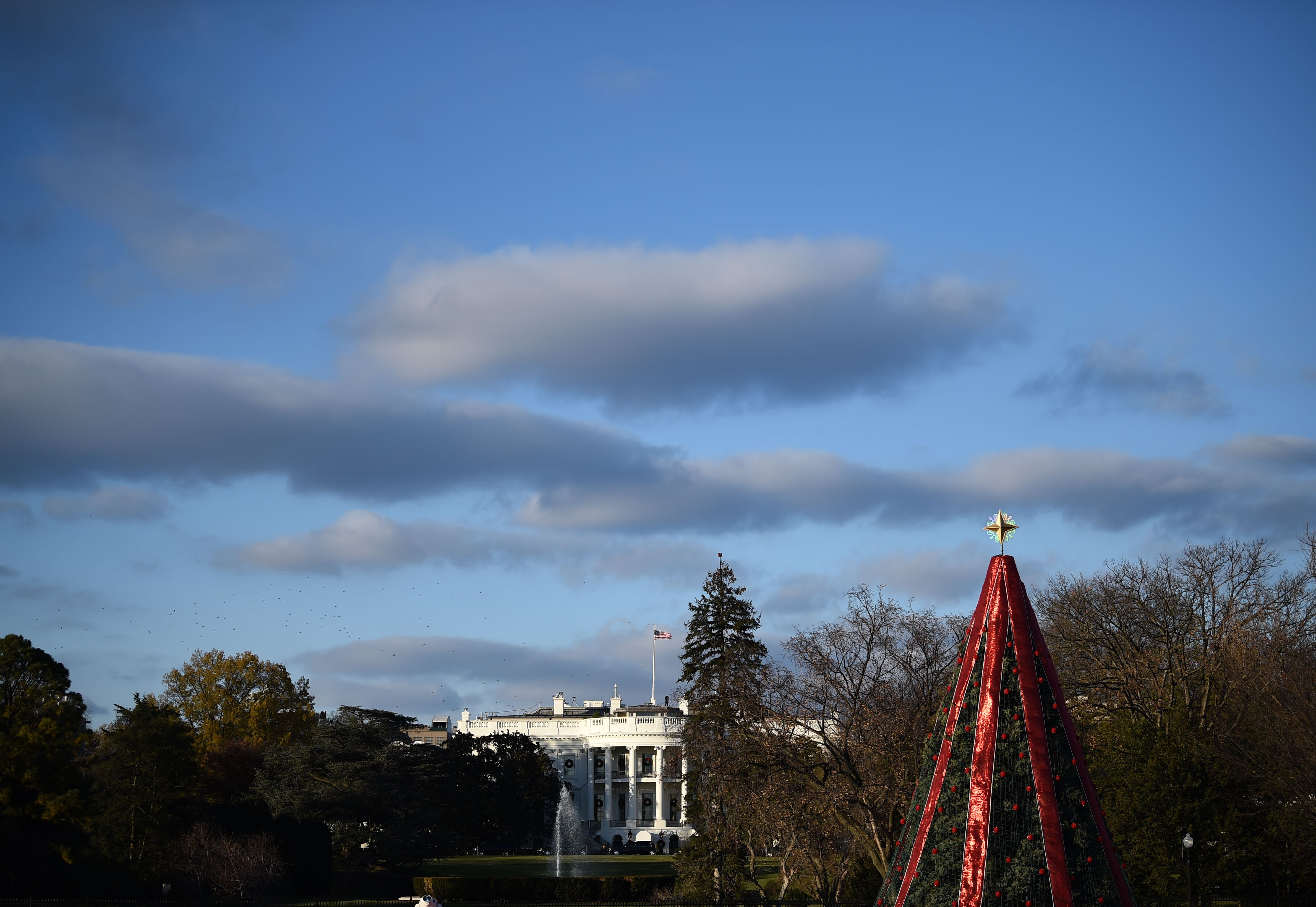 The National Christmas Tree in front of the White House