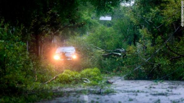 Hundreds of trees have collapsed after water-logged soil could no longer bear the weight.