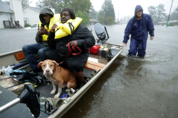 Volunteers from all over North Carolina help rescue residents and their pets from their flooded homeson Friday.