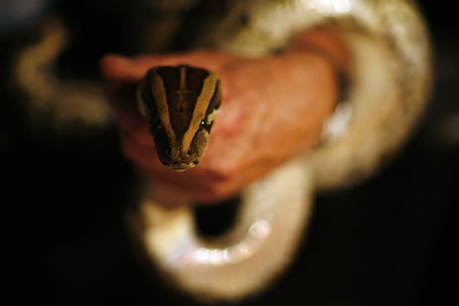 getty python us ban