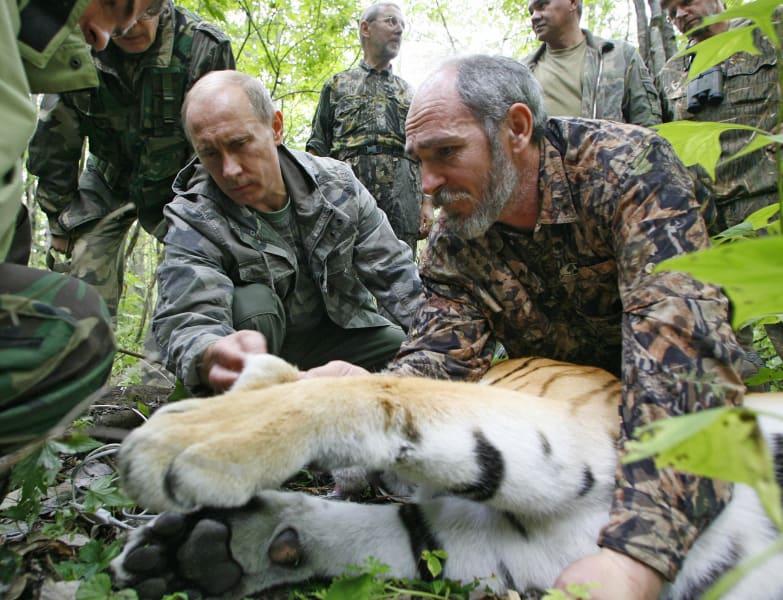 Vladimir Putin tiger