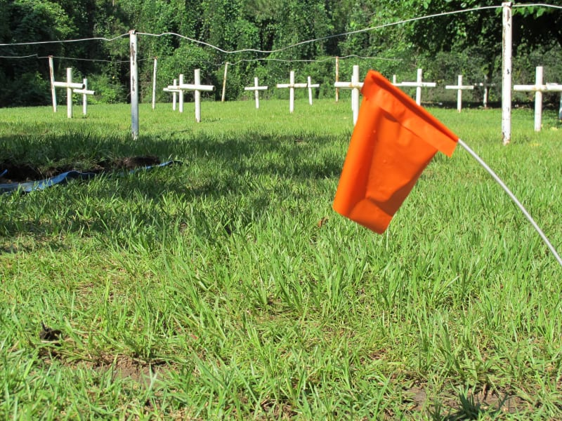 Florida reform school graves wideshot with flag