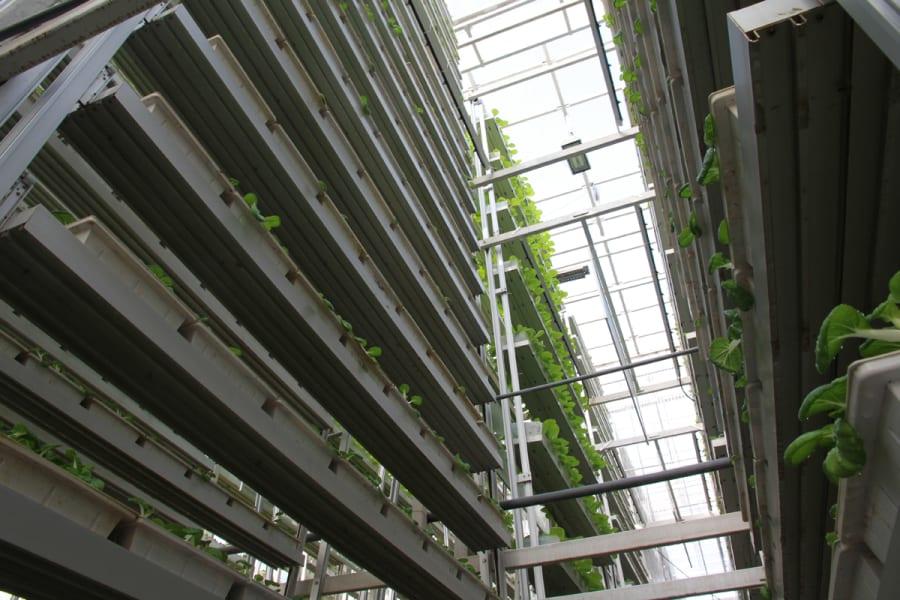singapore vertical farm 4