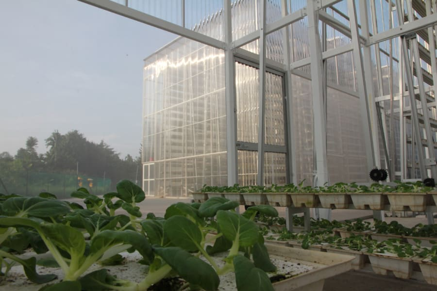 singapore vertical farm 6