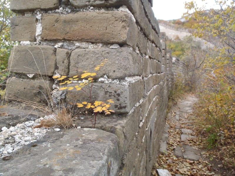 china great wall 11