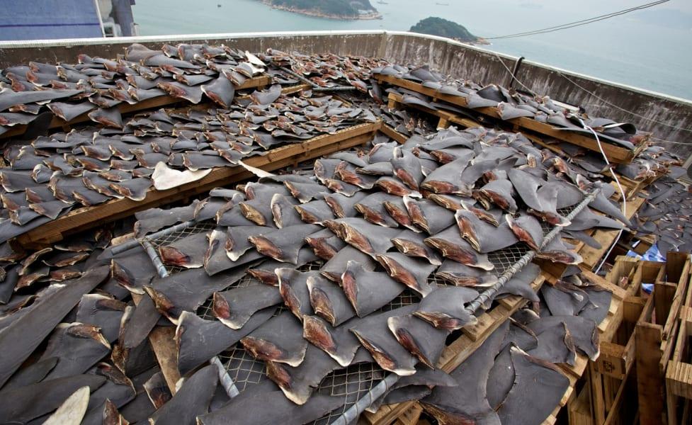 Hong Kong roof shark fins