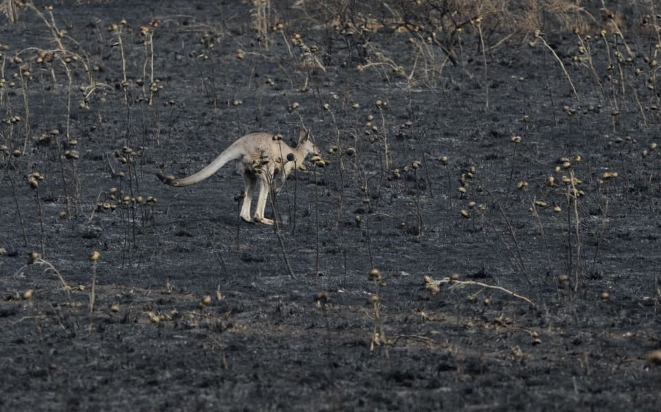 07 australia fires 0108