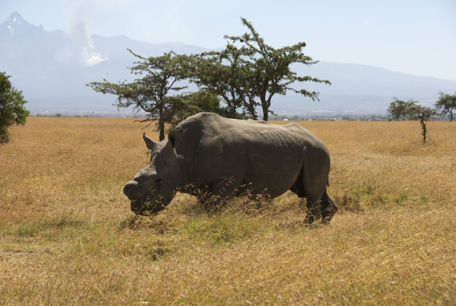 Ol pejeta rhino 5