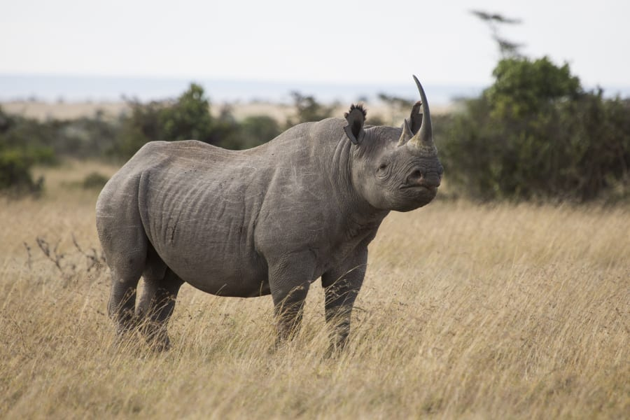 ol pejeta rhino 6