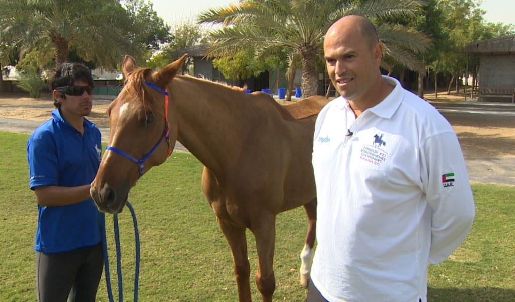 Endurance horses2