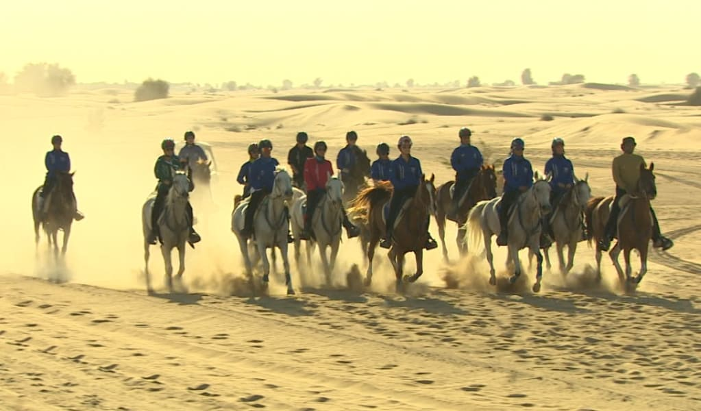 Endurance horses4