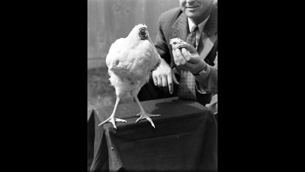 05 headless chicken