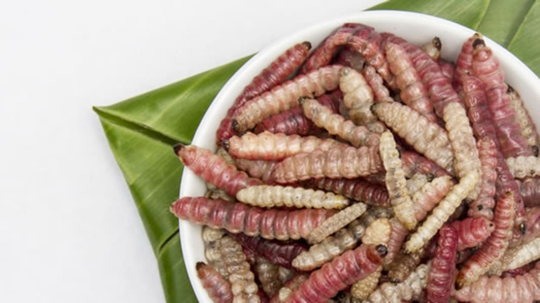 edible insects mexico