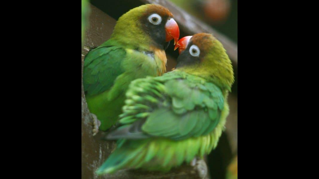 06 animal love