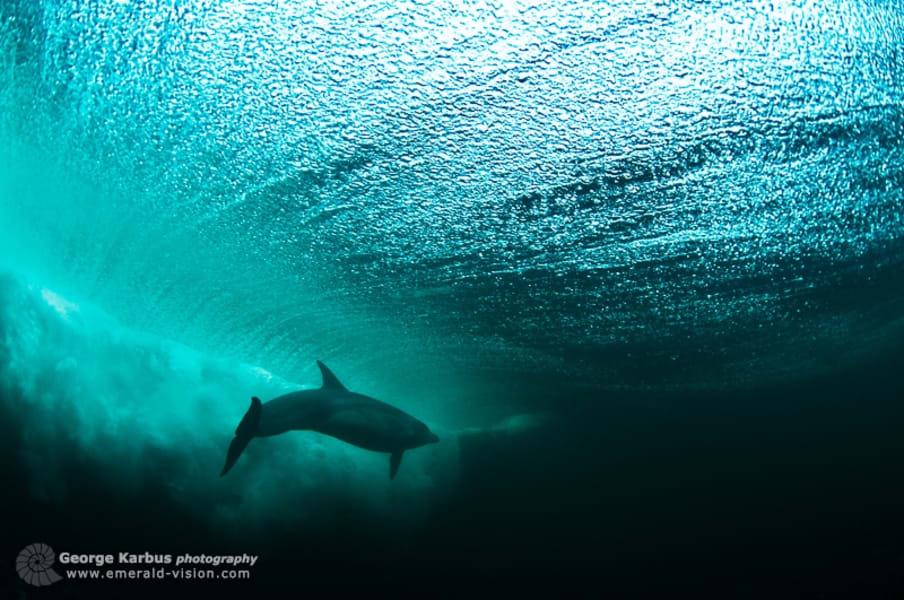 Dolphin Ireland 1