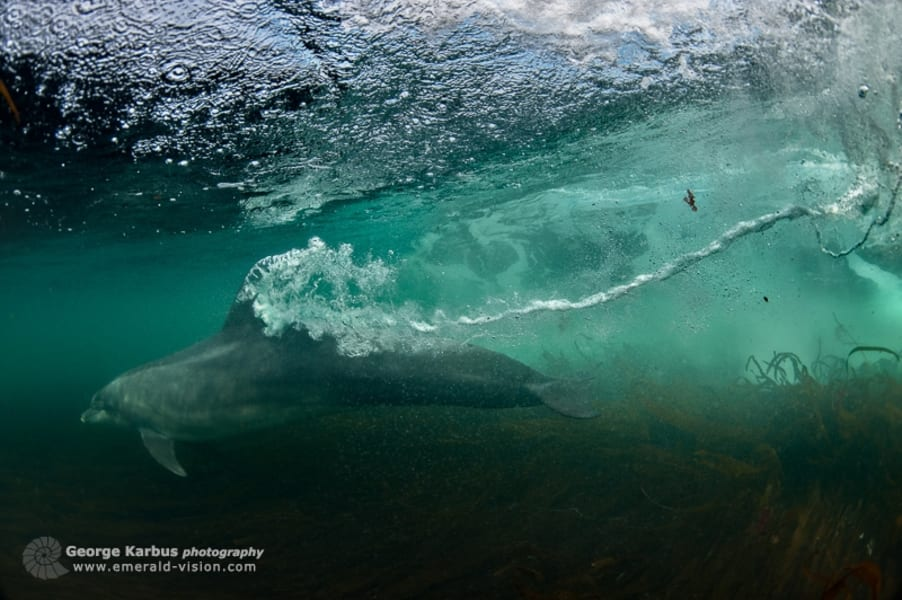 Dolphin Ireland 3