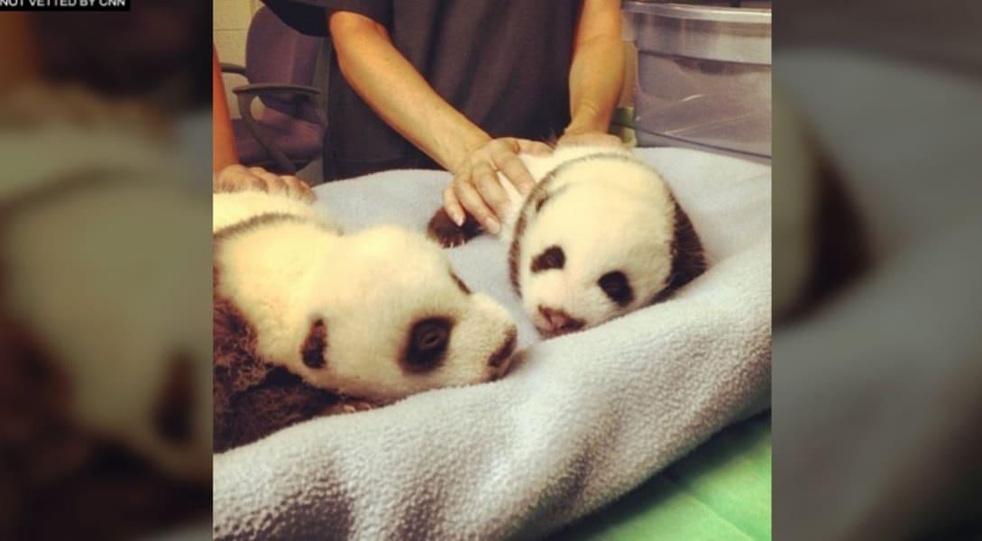 panda ig twins