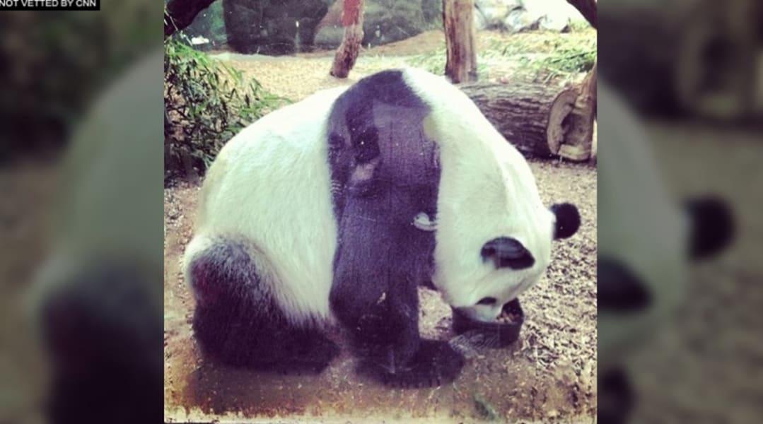 panda ig dad alina
