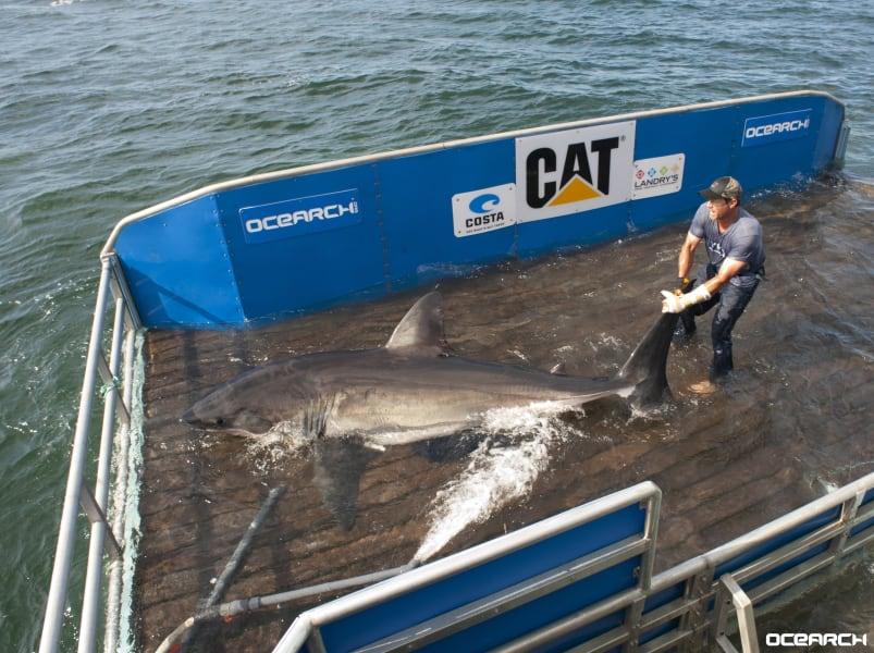 ocearch shark tagging platform