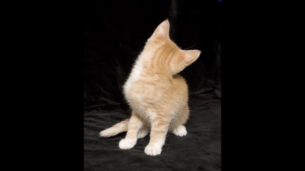 14 kittens RESTRICTED