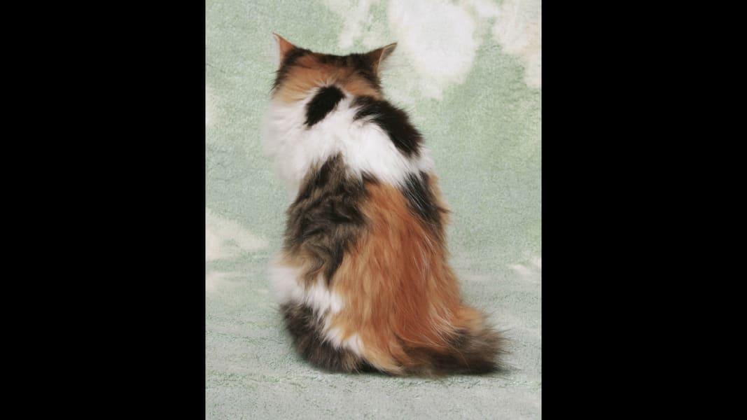 15 kittens RESTRICTED