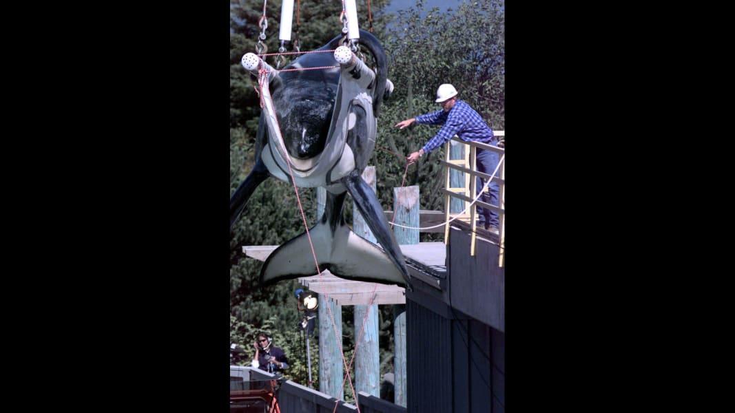 04 captive whales 1008