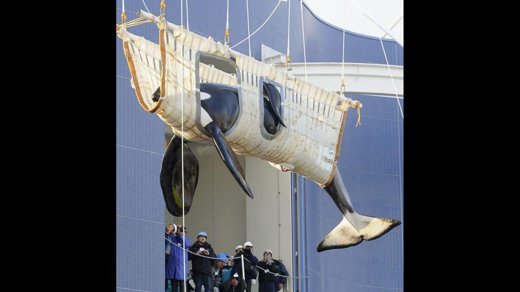08 captive whales 1008