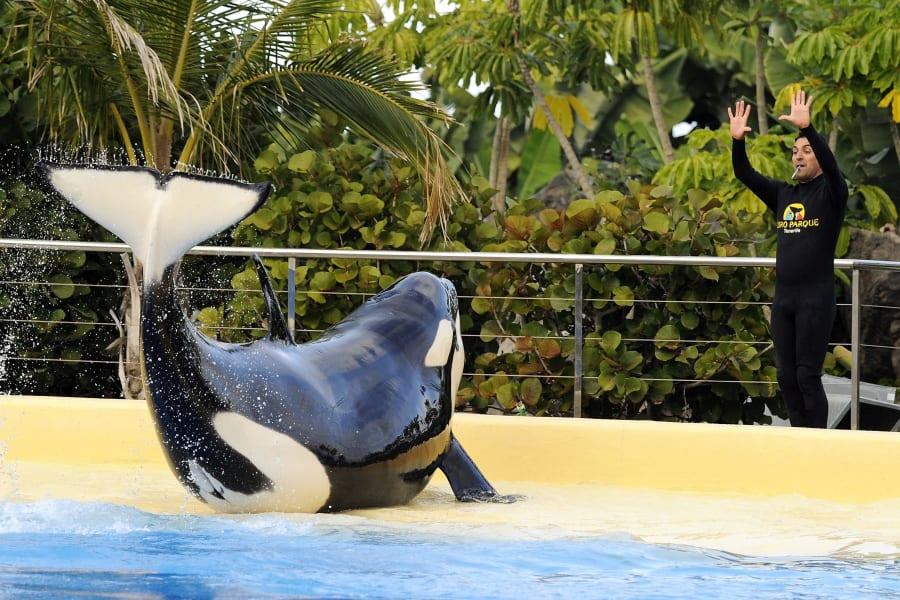 09 captive whales 1008