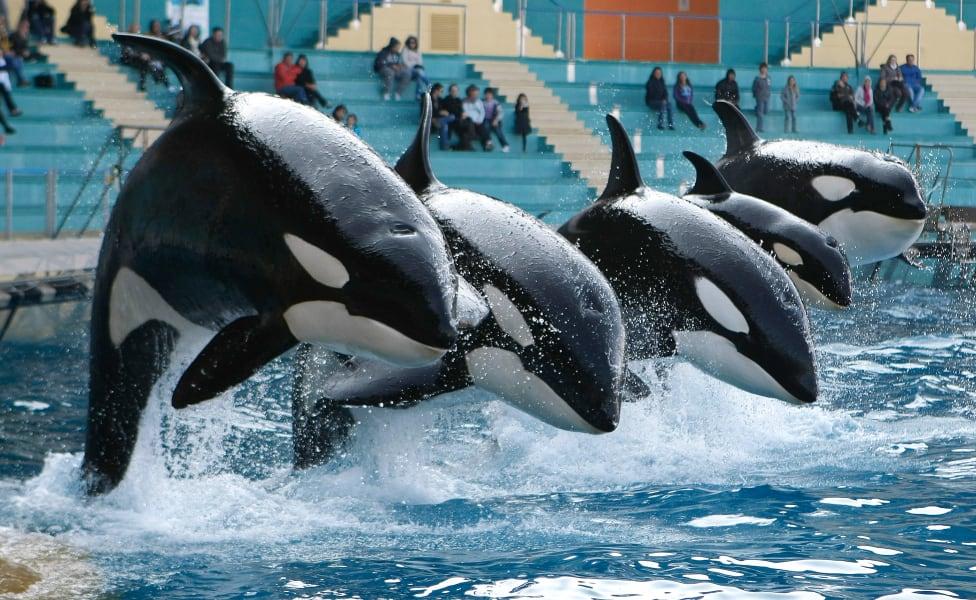 10 captive whales 1008