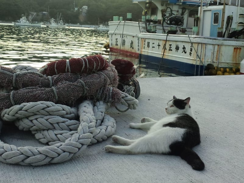 travel cats Tashorojima