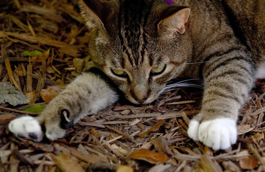 travel cats hemingway b