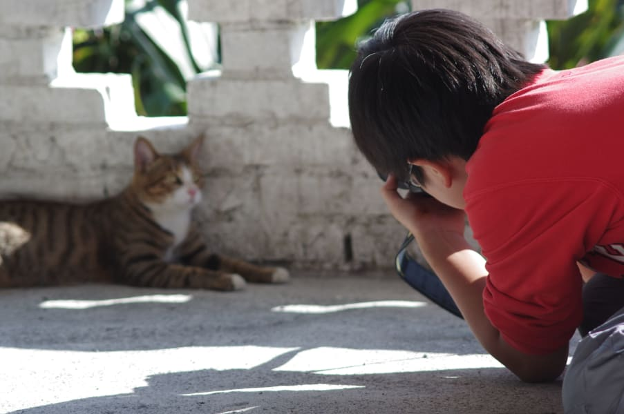 travel cats houtong a