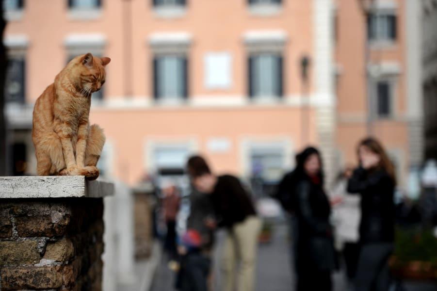 travel cats rome e