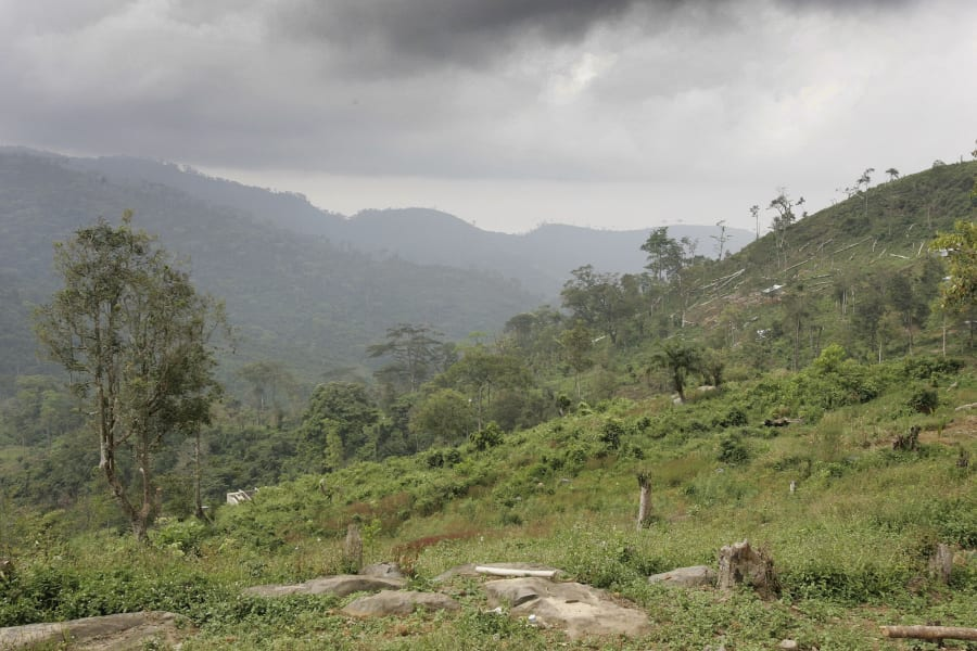 sierra leone forest