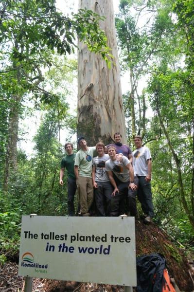 Explore Trees tallest planted tree