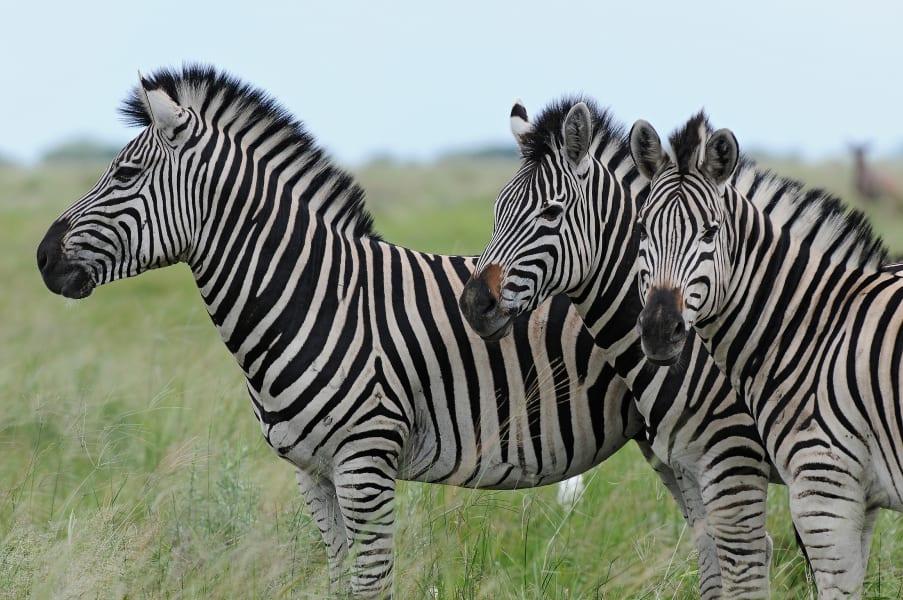 Botswana Conservation Park 5