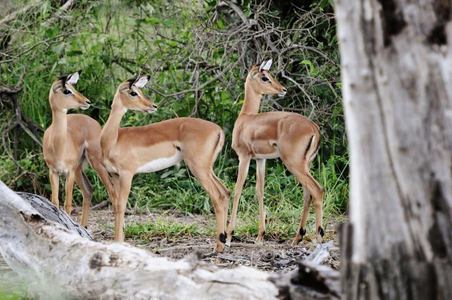 Botswana Conservation Park 6