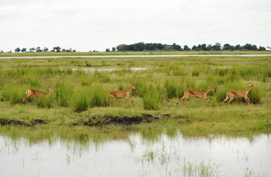 Botswana Conservation Park 8