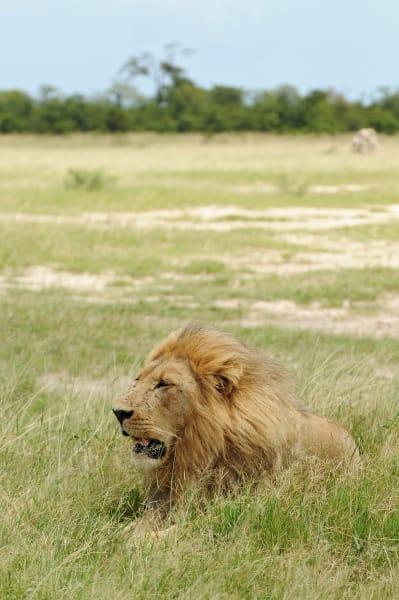 Botswana Conservation Park 11