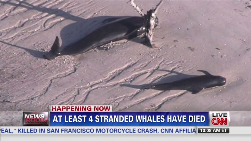 NR Zarrella Stranded Whales_00021414