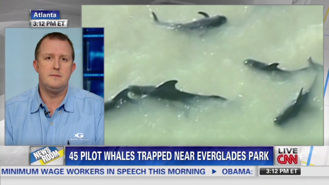 nr intv dove whales in Everglades park may be euthanized_00020226