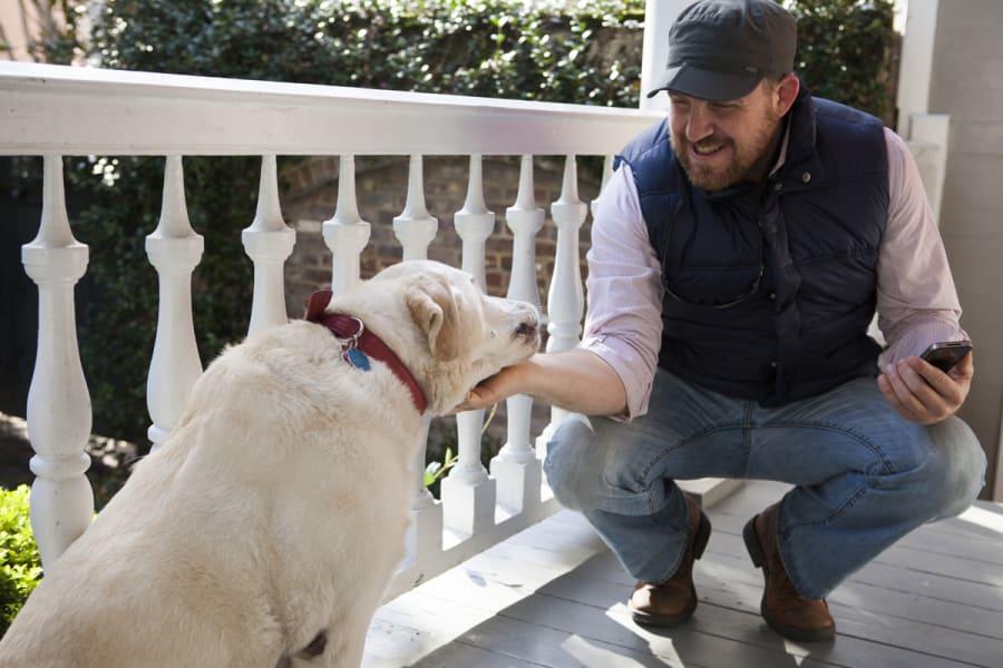 charleston dog 4