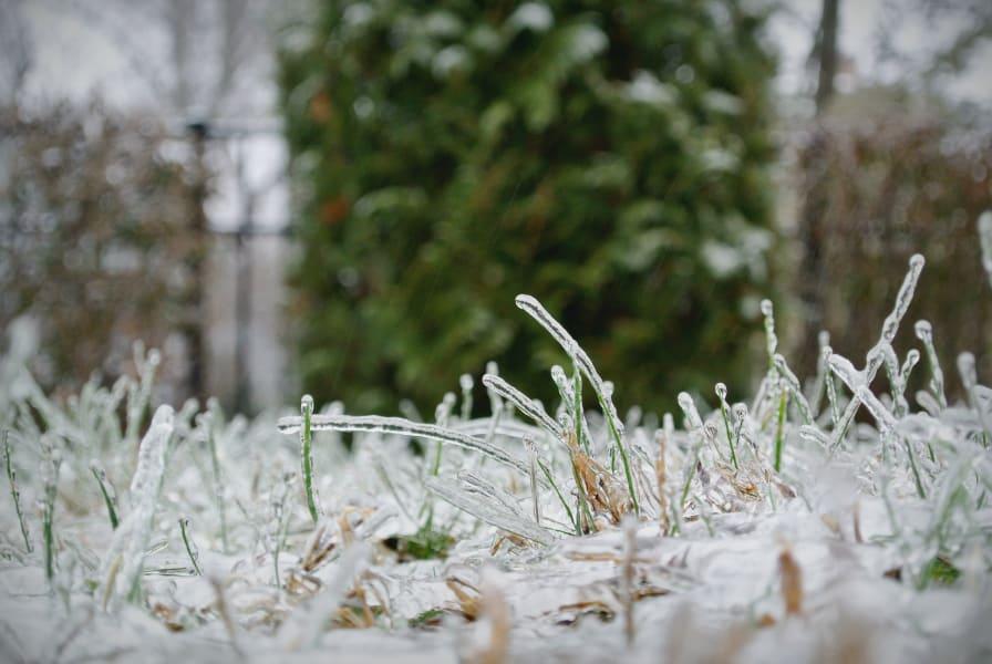 ice.grass.irpt